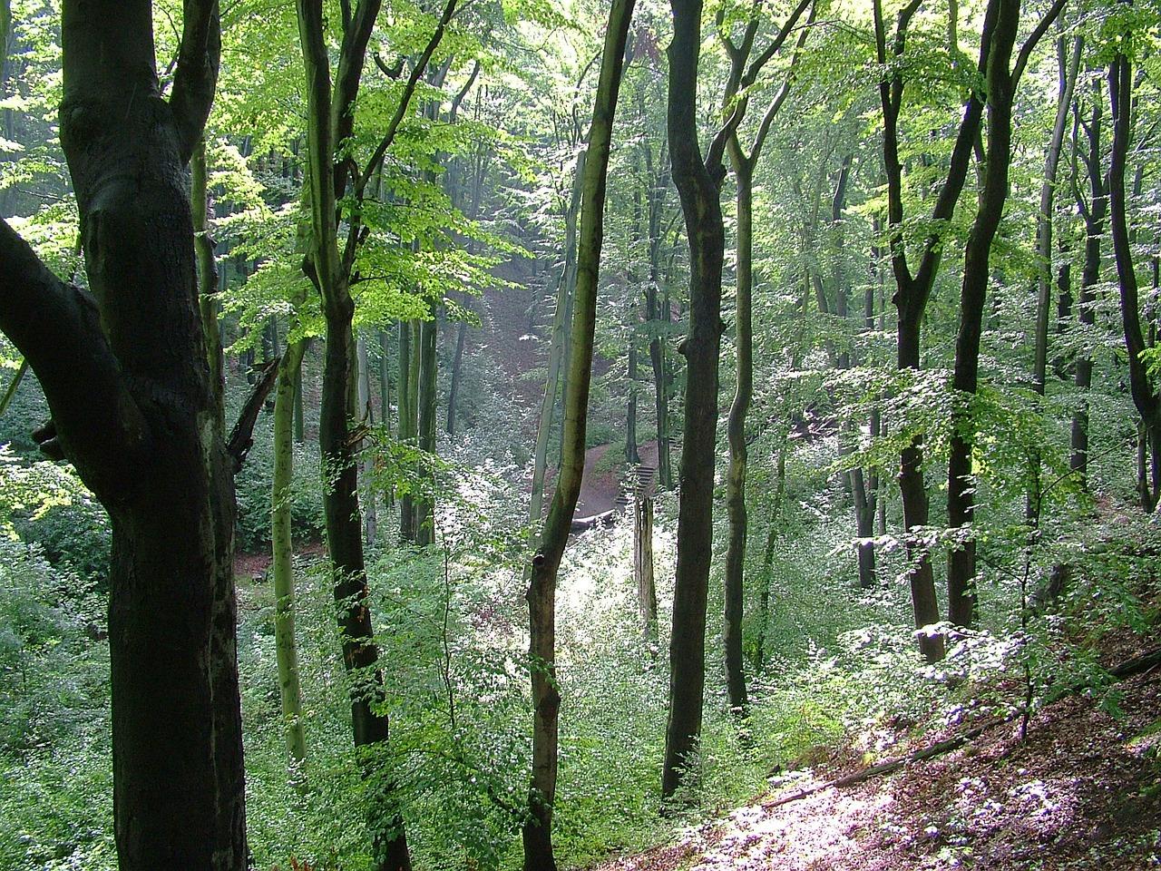 Hike Dresdner Heide