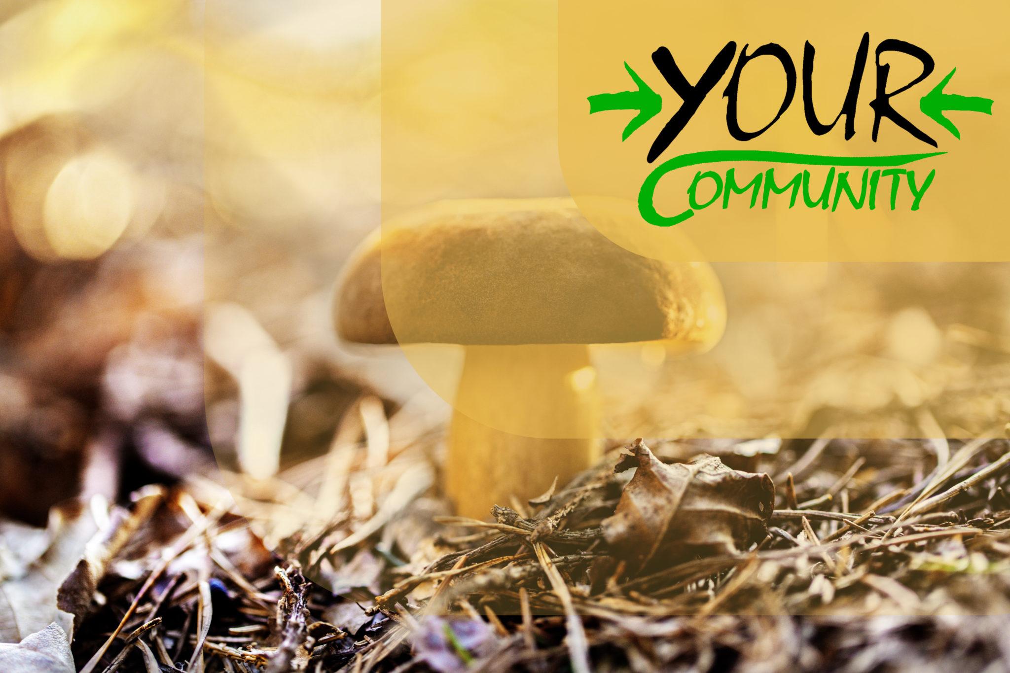 Mushroom hike through the Dresdner Heide